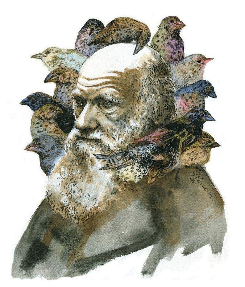 """Se les conoce como """"pinzó de Darwin"""" en honor a Charles Darwin que descubrió a quince especies de pinzones en su viaje a las Islas Galápagos"""