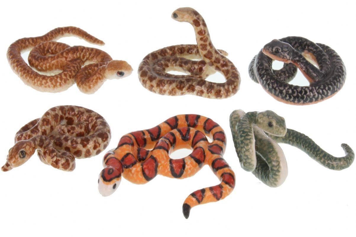 tipos de serpientes domesticas