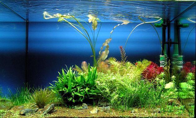 Por su pequeño tamaño los peces killis no necesitan de un acuario tan grande ya que tan sólo con un acuario de 15 a 20 litros de agua es suficiente para que pueda desarrollarse. Mediante la forma del acuario se recomienda que sea de poca altura y mucha anchura.