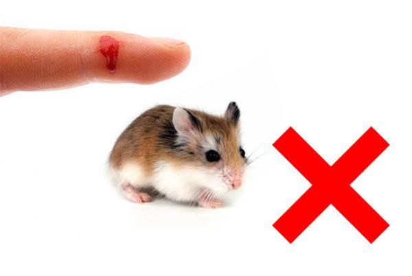 Los hámsters pueden ser domesticados para ser pequeñas mascotas muy dulces, pero para cualquiera que haya sido mordido por uno, saben que las mordeduras de hámster definitivamente no son divertidas