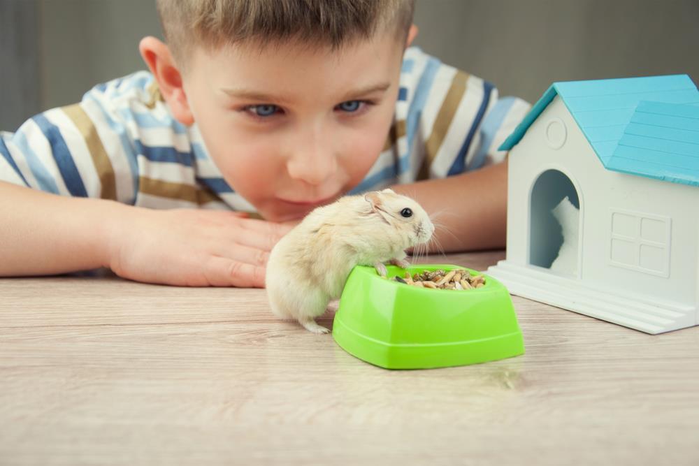 Si tiene niños pequeños o mascotas adicionales en su hogar, debe tomar precauciones para asegurarse de que su hámster esté seguro y feliz.