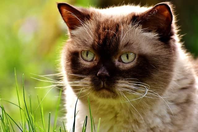 Básicamente lo que queremos decir es que los gatos no tienen la capacidad de detectar el sabor dulce, es decir, los gatos no pueden saber si lo que comen es dulce.