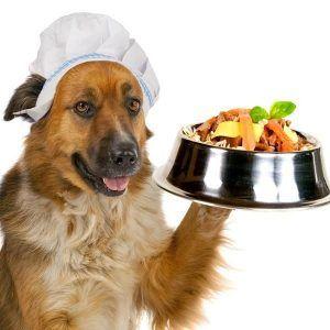 Los perros pueden comer espinacas