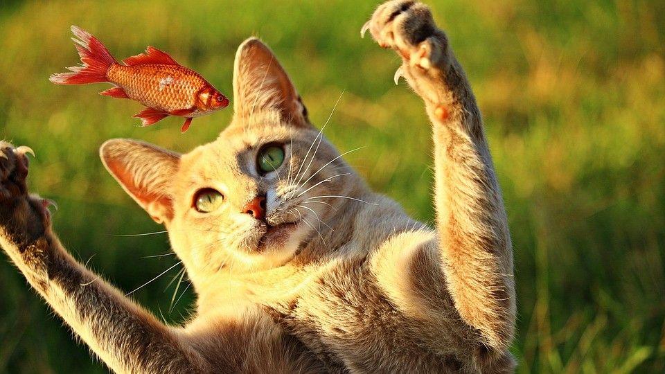 comida toxica para gatos
