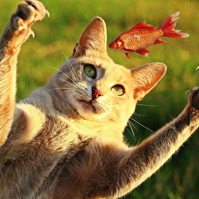 alimentos prohibidos para gatos