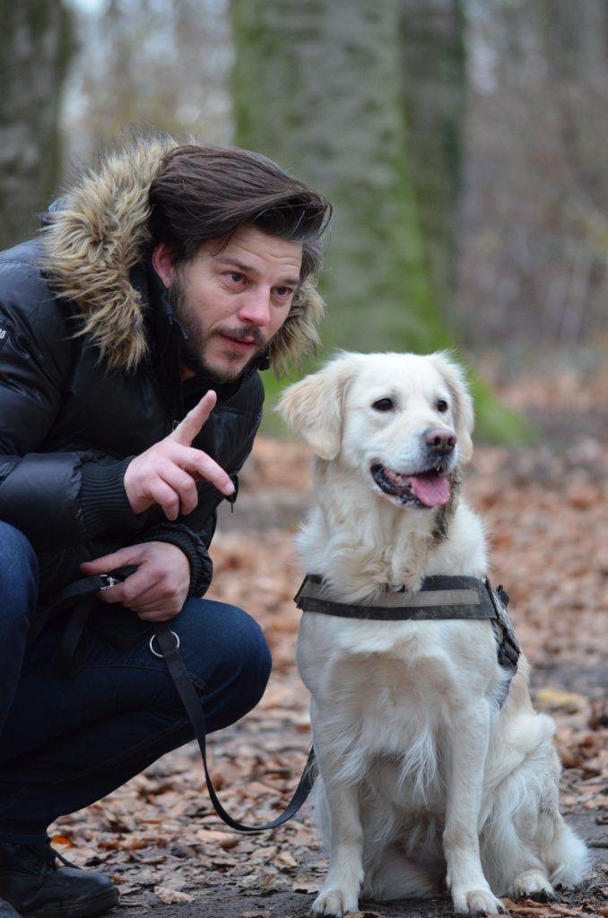 Perro labrador amarillo esperando ordenes de su amo en un bosque