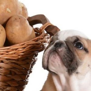 Los perros pueden comer papas