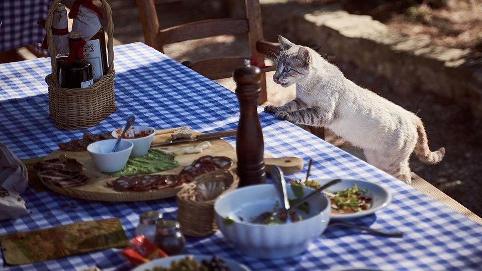 alimentos prohibidos para gato
