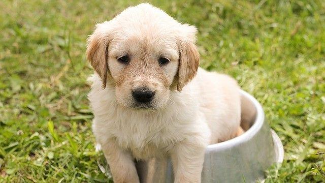 Perro sentado en su plato de comida listo para comer arroz