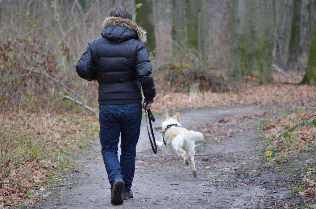 Perro labrador amarillo corriendo y jugando con una persona en un bosque