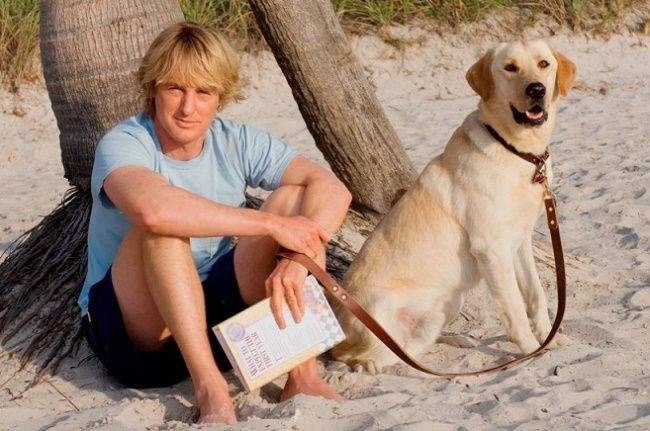 Perro labrador con famoso actor de cine