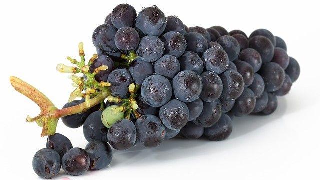 Las uvas son toxicas para los perros