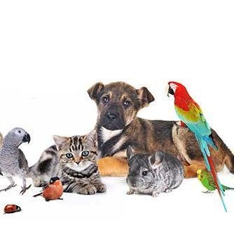animales exoticos