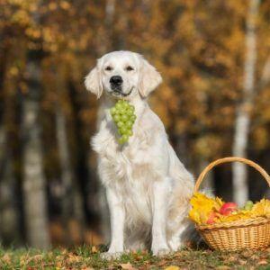 perro comiendo uvas